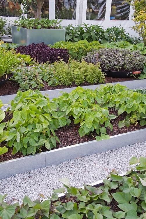 Vegetabel Garden, Raised Beds