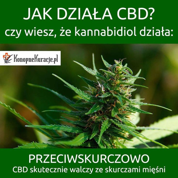 Jak działa CBD?  Czy wiesz że, kannabidiol działa: Przeciwskurczowo. CBD skutecznie walczy ze skurczami mięśni.  #cbd #olejkicbd #olejekcbd #olejcbd #konopie #konopnekuracje #konsultacje #zdrowie #kuracja #depresja #odporność #stress #energia #warszawa #polska #fitness