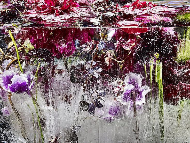 """By freezing beautiful and colorful flowers into large blocks of ice, Japanese artist Kenji Shibata has created a subject for his photos that is both strikingly beautiful and poignantly symbolic. His """"Locked in the Ether"""" photo series features flowers literally frozen in time, cut down and preserved in ice to both save and destroy their beauty."""