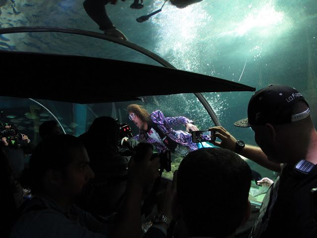Red Foo Filming in our tank at Manly Sea Life Sanctuary...