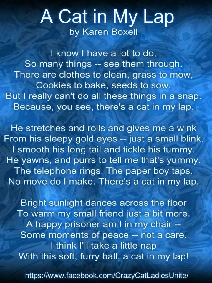 Pin By Cat Accessories For All On 1 Pix Cats Other Pets And Animals Plus Cat Sleeping Kittens Crazy Cats