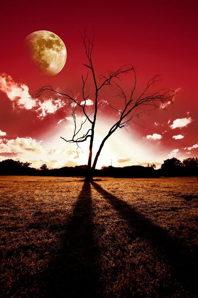 #tree #moon #red #sky #field