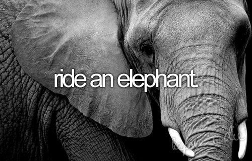 Ride an elephant.