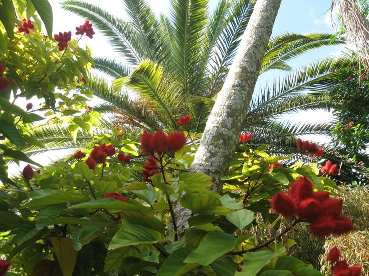 Flora of Grand Caymen Island