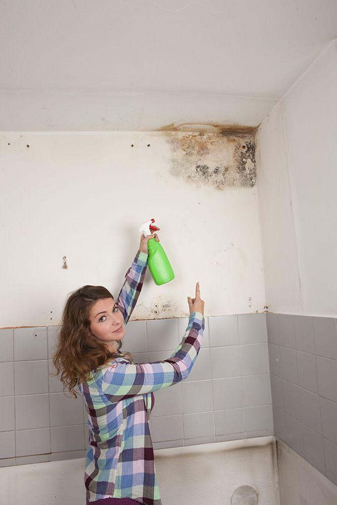hongos en la pared