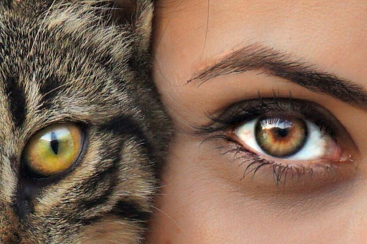 картинка глаз человека и кота бесплатно крутые картинки