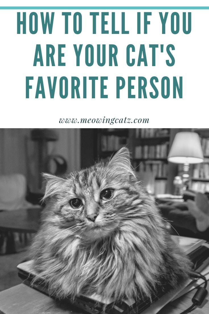 How To Tell If You Are Your Cat S Favorite Person Cat Training Cats Favorite Person