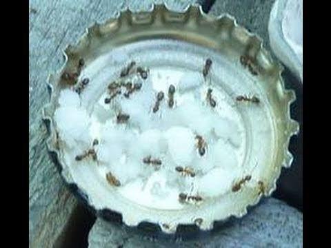 Heb jij ook zo'n last van mieren? Kijk hoe hij 3 ingrediënten mixt om er vanaf te komen. Dit werkt echt goed! - Zelfmaak ideetjes
