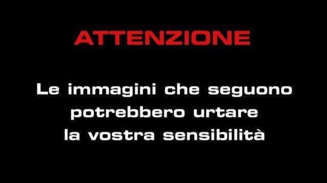 Reggio Calabria, i due cuccioli si trovavano all'interno di un sacco vicino ad…