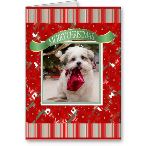21 best pet photo christmas cards images on pinterest for Best personalized christmas cards