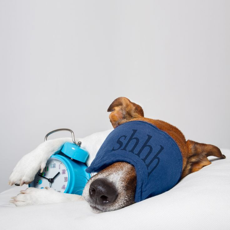 Die neue Woche fängt ja gut an 😊 ...  #fashion #style #stylish #shopping #luxury #lifestyle #duxiana #bett #dux #bed #beautiful #instagood #fun #love #amazing #smile #look #instalike #igers #picoftheday #dogbed #dogstyle #dogpic