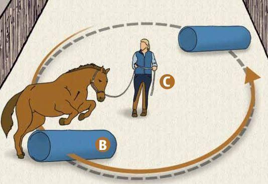 Berni Zambail schwört beim Muskelaufbau auf die Parelli Hügel Therapie. Nach sechs Wochen ist Ihr Pferd in Topform (Artikel aus CAVALLO 8/2011).