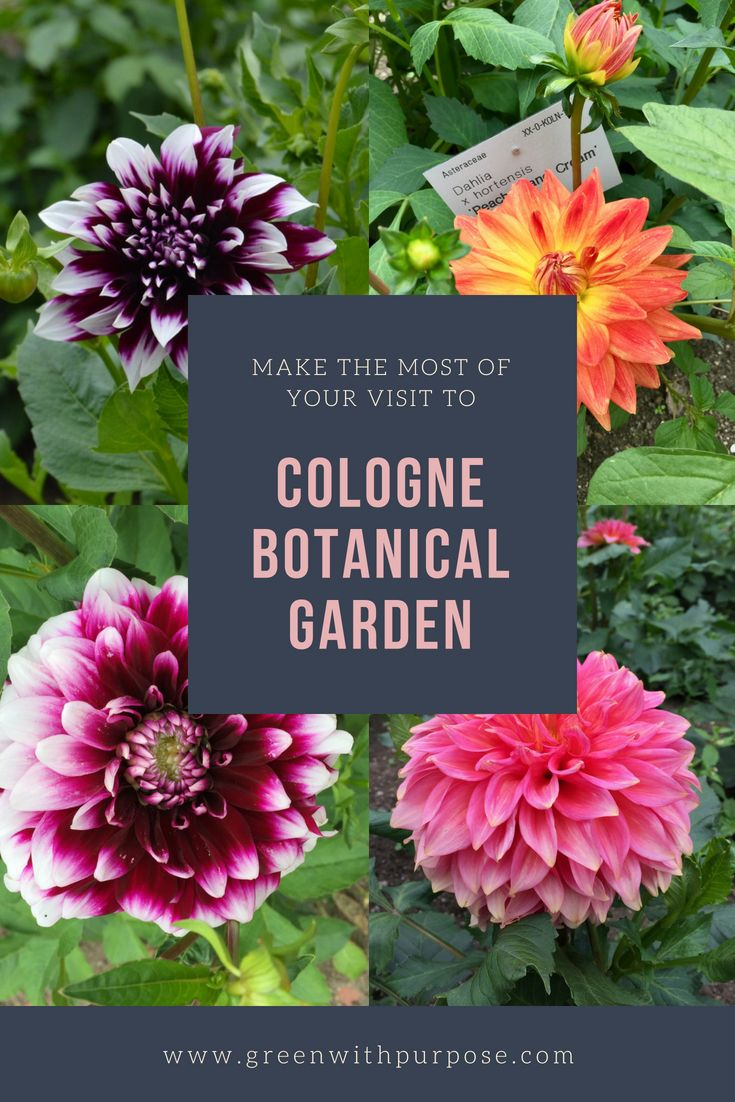 9 Things You Should Know Before You Visit The Botanical Garden In Cologne Botanical Gardens Botanical Planting Flowers