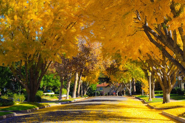 A Fall Day in Pasadena, California