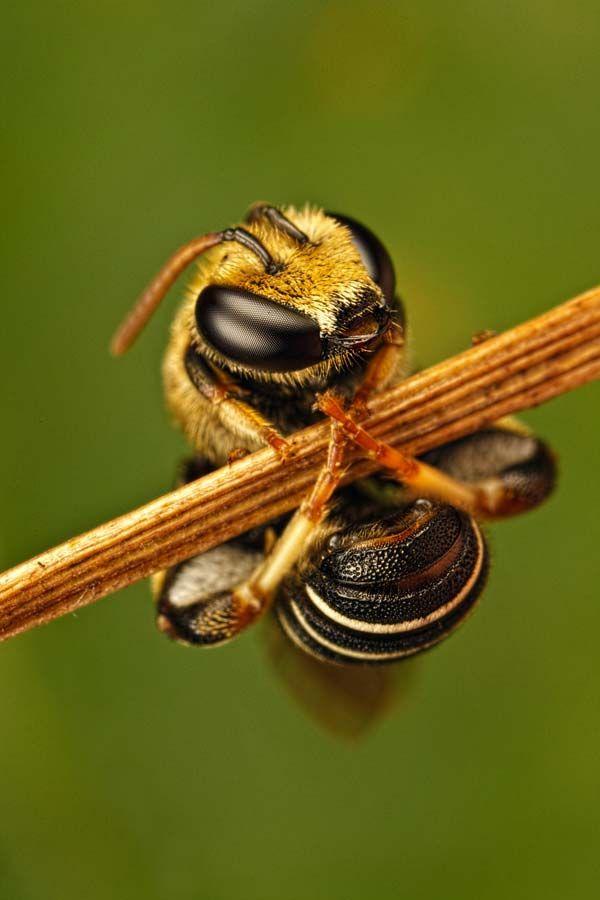 Fantastični insekti - Page 8 F9ea6e08ccc1349ef936cce488f523b0