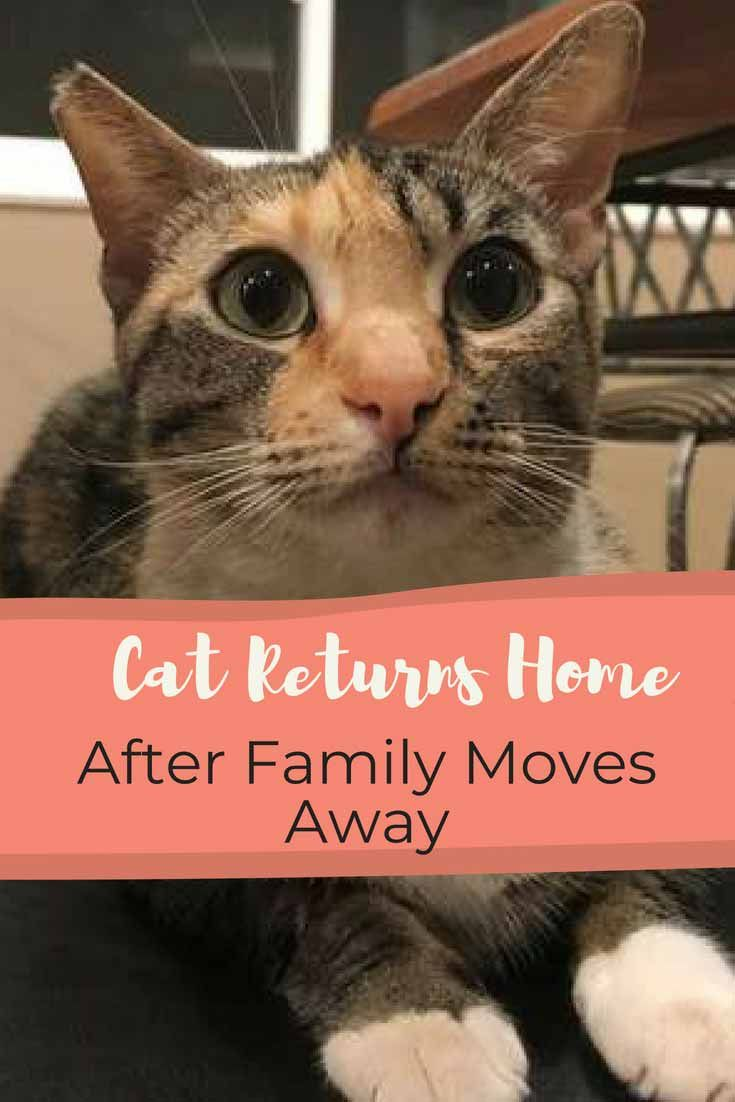 Family Moves Into New Home And Finds Previous Owner S Missing Cat Cats Cat Rescue Moving
