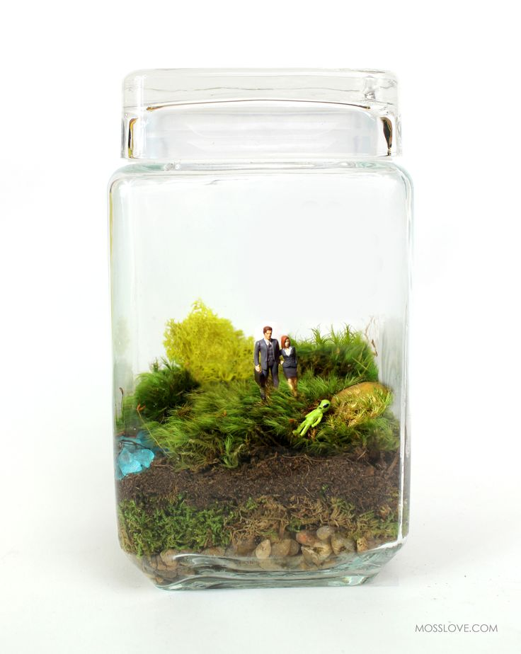 X-Files Inspired Terrarium // Miniature Mulder + Scully — Moss Love