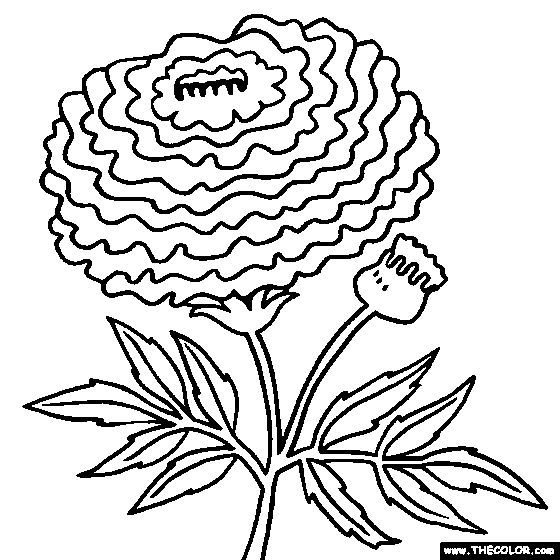 marigold flower coloring page