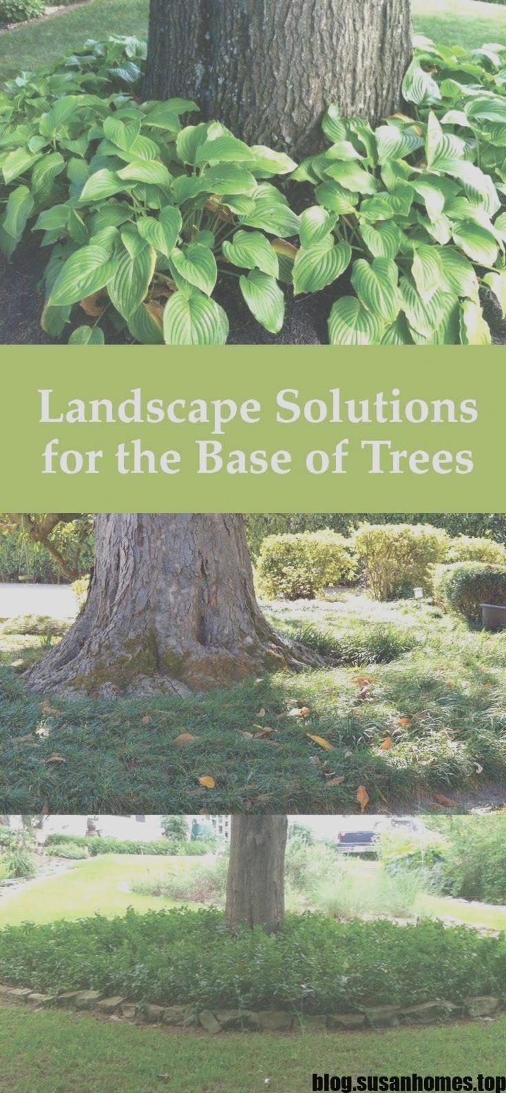 Melhor paisagismo sem custo em torno das árvores Estratégias: Um bom paisagismo pode …   – Landscaping