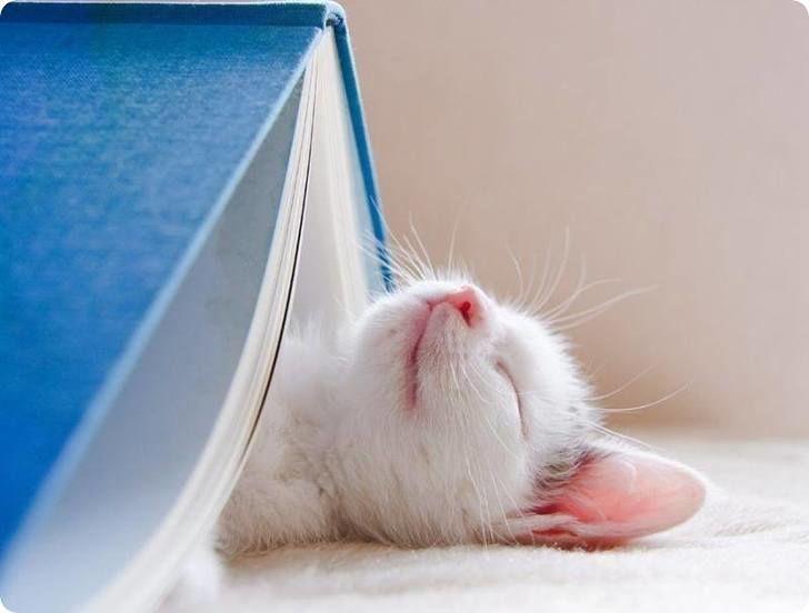 mignon chaton blanc endormi sous un livre bleu