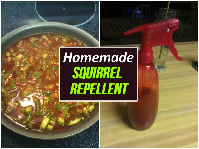 Homemade Natural Squirrel Repellent Sewing Tips Pinterest More Squirrel Homemade And