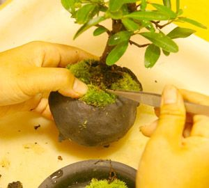 How to Make & Grow a Bonsai. i must get into the art of bonsai! i love them!