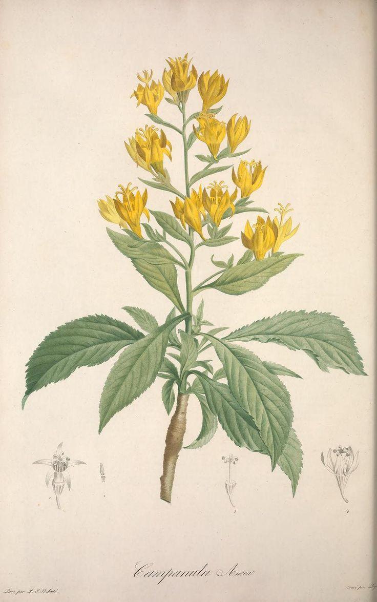1804 vol 2 jardin de la malmaison dedicated to - La redoute meuble jardin ...