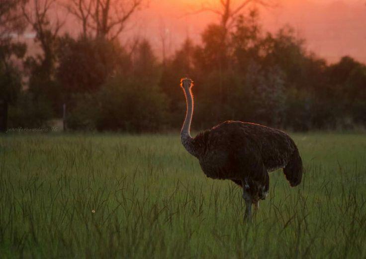 Appreciate the sunsets  Farm animals Farm photography Mpumalanga South Africa