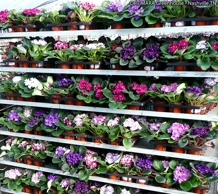 Bursting with color and ready for packing search for a for Indoor gardening retailers