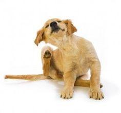 garrapatas en perros
