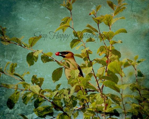 Cherry Picker by Snaphappy72 on Etsy, $15.00