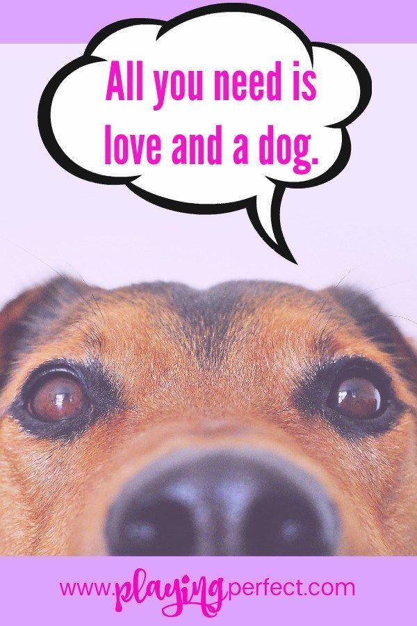 All you need is love and a dog; you know it's true! Actually… since dogs are 100% love maybe all you really need is a dog! Plus of course some dog quotes so here are over 80 awesome dog quotes that will make any dog mom, dog dad, and dog person smile! Get a FREE dog printable pack too! | playingperfect.com | #dog #dogs #dogmom #dogdad #dogquotes #quotes #ilovemydog #dogsarethebest #playingperfect #progressnotperfection #happyquotes #petquotes #dogstuff #love #doglover #dogideas #dogmoms…