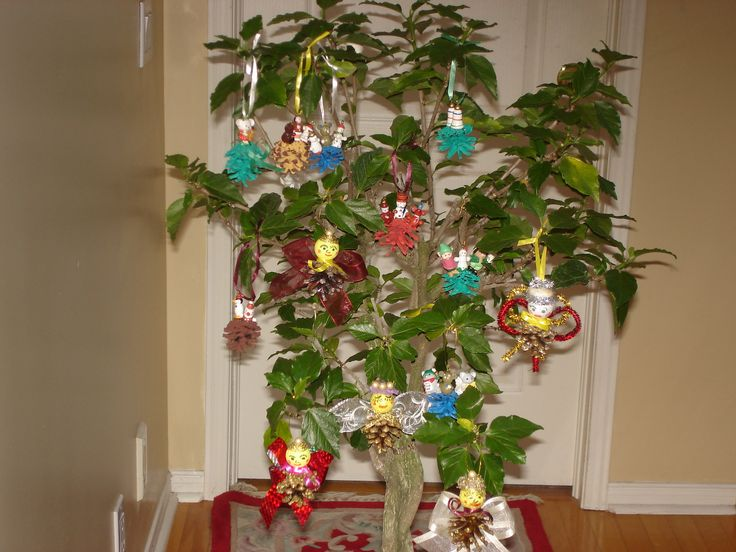 made some pinecone angels and crafts. Just hang them on my Braided Hisbiscus tree to take a picture. I just made them for a gift. This is my first project. I got all the ideas from Pinterest.