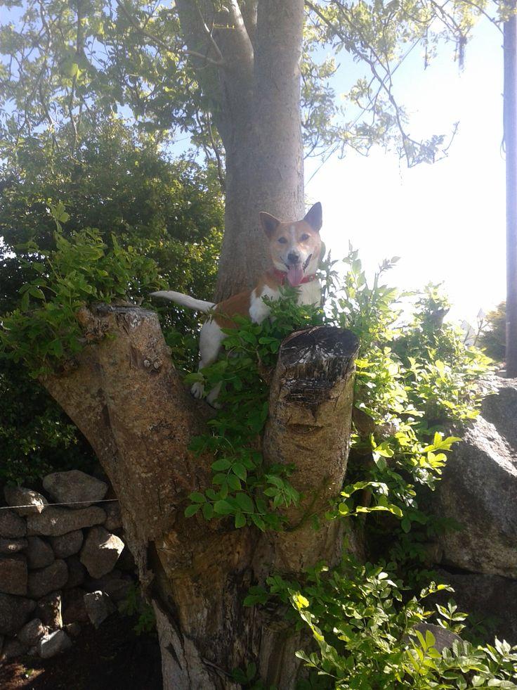 I'm up a tree! Hehe! :D xx <3