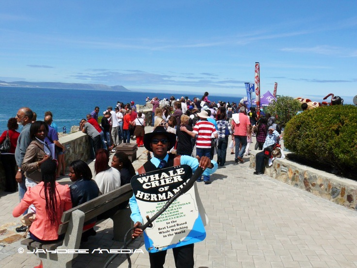 Hermanus – home to the world's only 'Whale Crier'- is considered the best land-based location for whale-watching anywhere in the world.  Located along the southern coast of South Africa's unspoilt Western Cape, Hermanus provides a unique opportunity to watch the Southern Right Whales as they migrate from the Antarctic to calve in the shelter of Walker Bay.