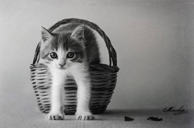 Tenero gattino in un cestino