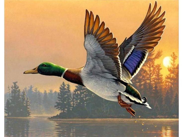 Утки летят картинка