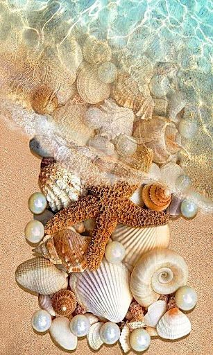 We are like shells on the beach; Waves of life wash over and renew us; some shells are removed and we may never see them again- we will always remain connected for that momentary wave that we were nourished and bonded -.