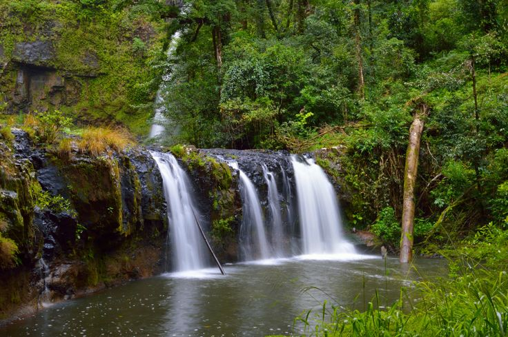 https://flic.kr/p/tWdQK2 | Nandroya falls, Wooroonooran NP