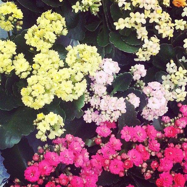 #SummerStreets #Flowers by @Sister