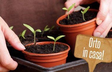 Orto in vaso: 5 verdure che potete coltivare in casa durante l'inverno! | Giardinieri in affitto