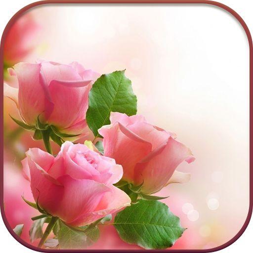 ohhhhhhhhhhhhhhhhhhгфхйн | Розовые обои, Розы и Красивые цветы