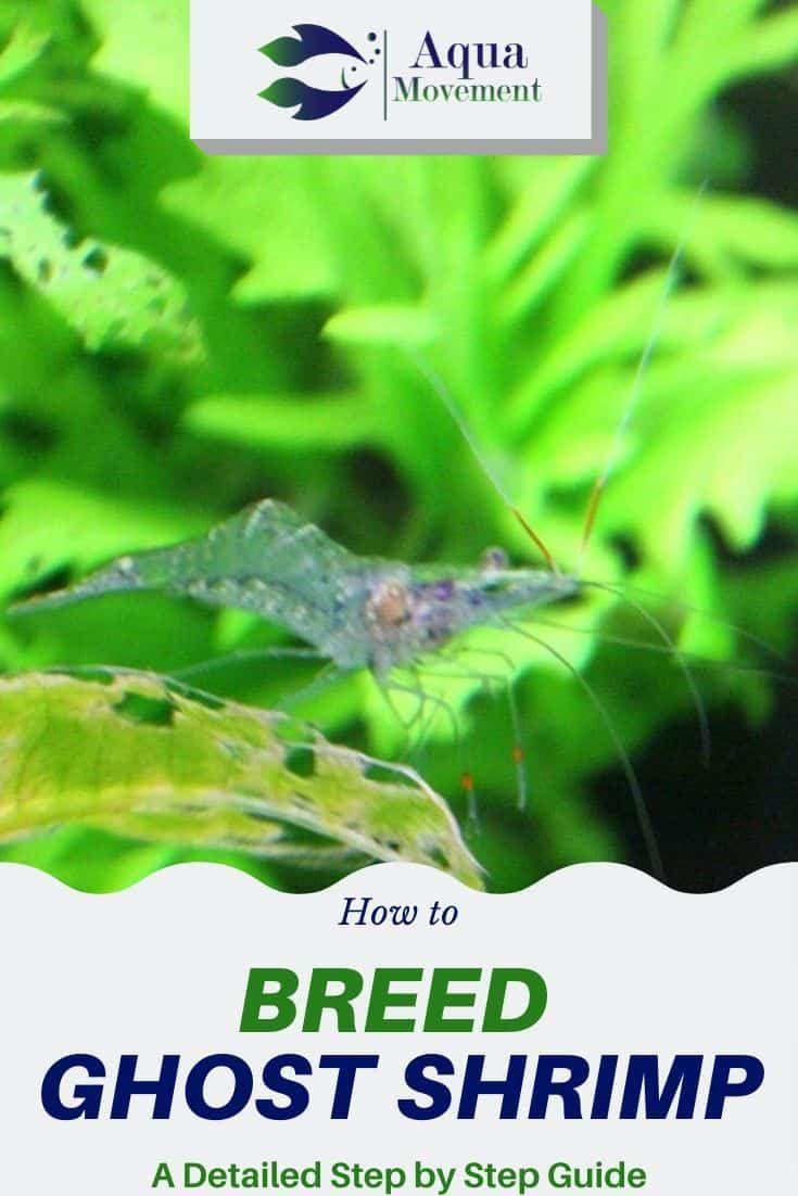 f9edcddedd33e90b81fad50ab5998b4e - How To Get Rid Of Mosquito Larvae In Shrimp Tank