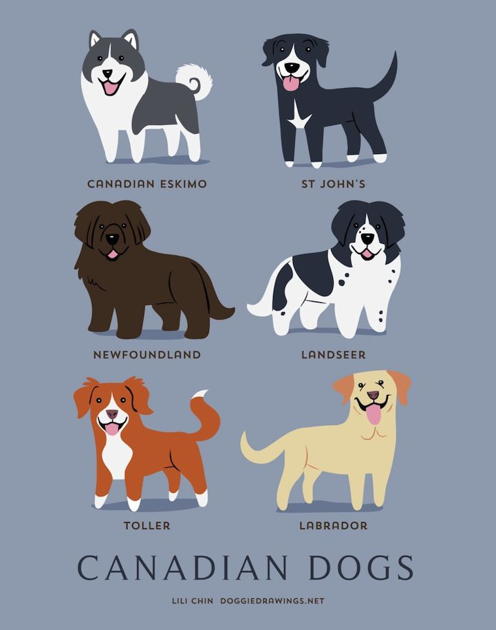 Delightful Illustrated Posters Are a Guide to 192 Dogs of the World by Lili Chin - My Modern Met