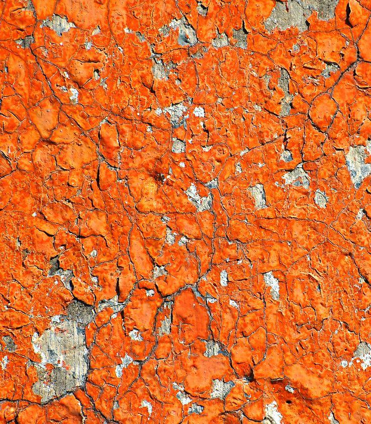 25 Best Ideas About Burnt Orange Paint On Pinterest