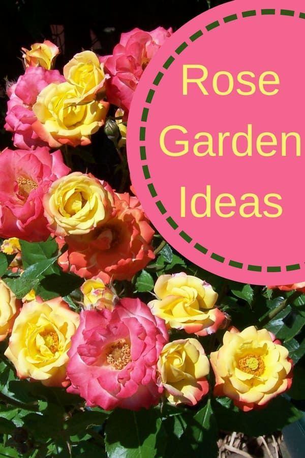 Front Yard Rose Garden Rose Garden Design Rose Garden Herb