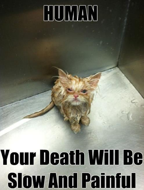 Very Funny Pics - Cats - Painful Death