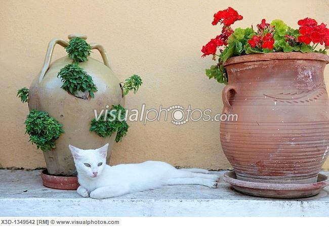 White Cat, Paleokastritsa, Corfu, Greece,