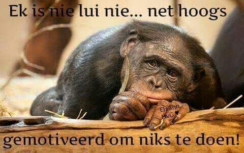 Nie lui nie - hoogs gemotiveerd om niks te doen nie... #Afrikaans
