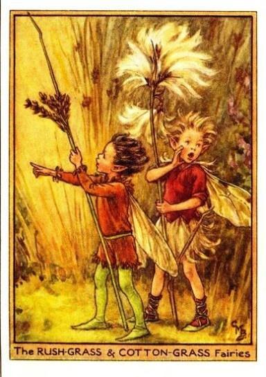 Rush-Grass & Cotton-Grass Flower Fairy Print Cicely Mary Barker